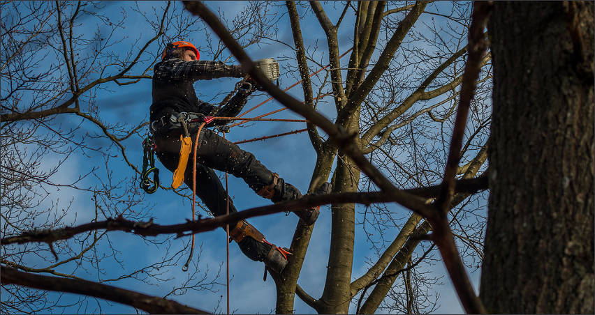 tree-removal-surgery-temple-tx