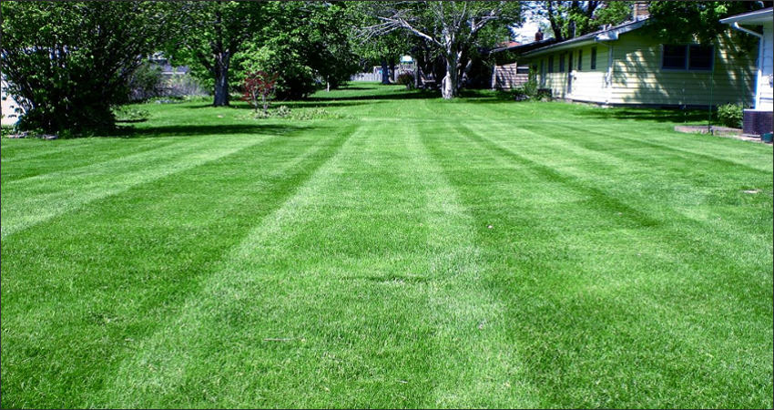 Lawn Care Temple Amp Killeen Tx Dreamscapers Landscaping